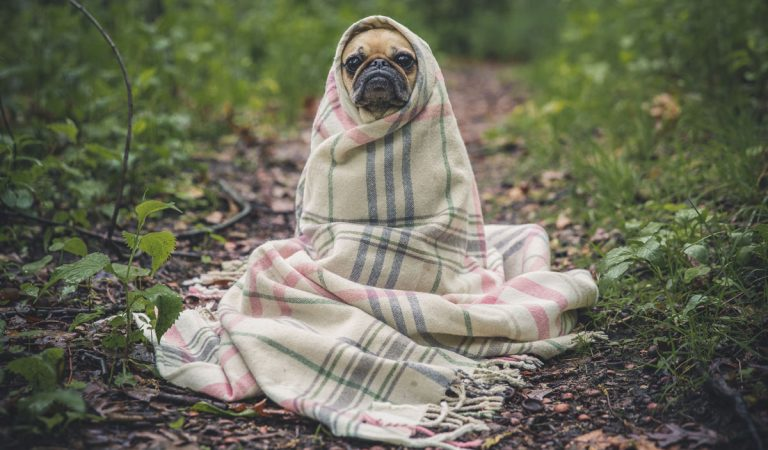 100 Amazing And Interesting Facts About Dogs