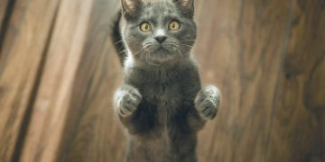 Amazing And Interesting Facts About Cats